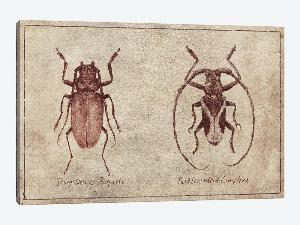 Dorysthenes Buqueti-Paraleprodera Crucifera by Mike Koubou 1-piece Canvas Print