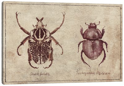 Ornate Goliath- Trichogomphus Martabani 2 Canvas Art Print