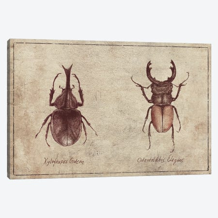 Xylotrupes Gideon-Odontolabis Elegans 2 Canvas Print #MKB156} by Mike Koubou Canvas Art