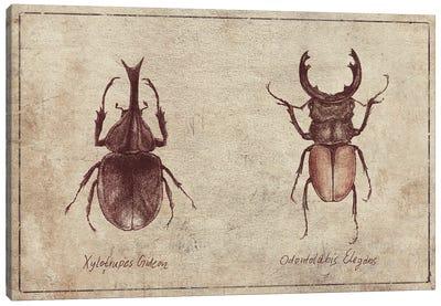 Xylotrupes Gideon-Odontolabis Elegans 2 Canvas Art Print