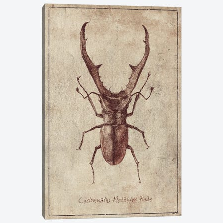 Cyclommatus Metalifer Finae 2 Canvas Print #MKB157} by Mike Koubou Canvas Artwork