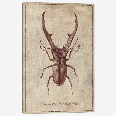 Cyclommatus Metalifer Finae 2 Canvas Print #MKB157} by Mike Koubou Canvas Artwork