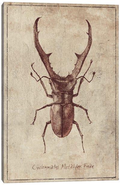 Cyclommatus Metalifer Finae 2 Canvas Art Print