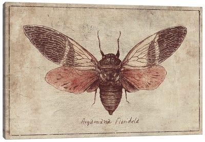 Argamiana Floridula 2 Canvas Art Print