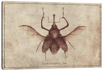 Cyrtotracheulus Dux 2 Canvas Art Print