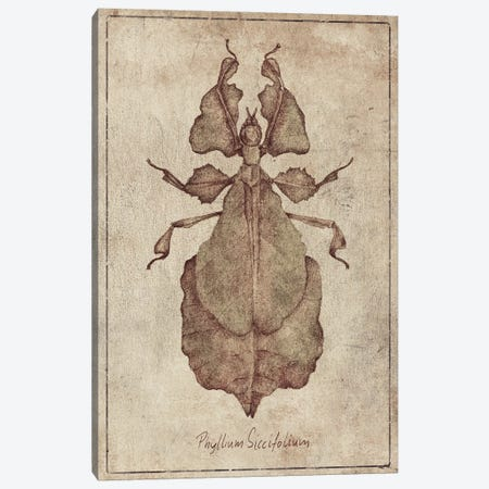 Phyllium Siccifolium 2 Canvas Print #MKB161} by Mike Koubou Canvas Artwork