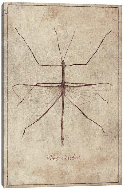 Phasmatidae 2 Canvas Art Print