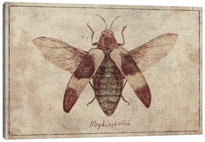 Megaloxantha 2 Canvas Art Print