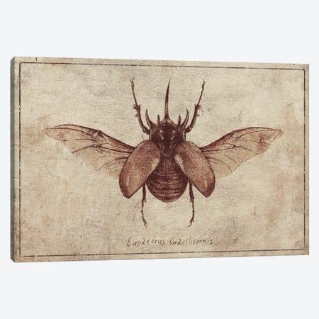 Eupatorus Gracilicornis 2 Canvas Print #MKB164} by Mike Koubou Canvas Art Print