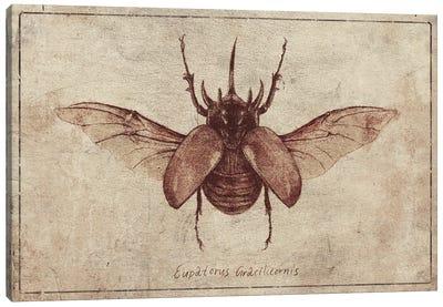 Eupatorus Gracilicornis 2 Canvas Art Print