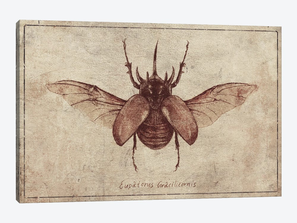 Eupatorus Gracilicornis 2 by Mike Koubou 1-piece Canvas Print