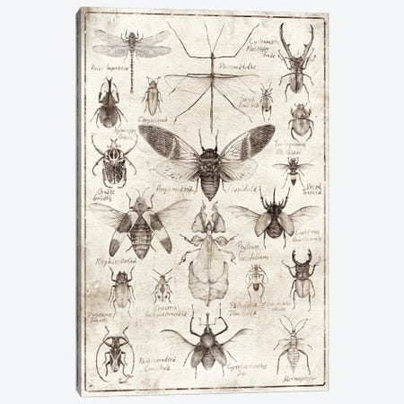 Insects B/W Canvas Print #MKB165} by Mike Koubou Canvas Print