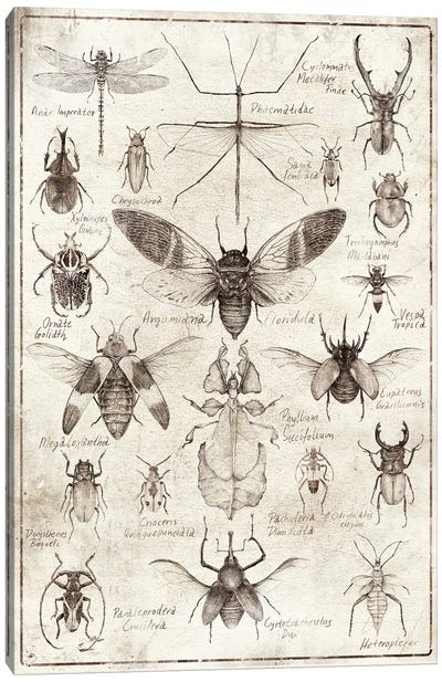 Insects B/W Canvas Art Print