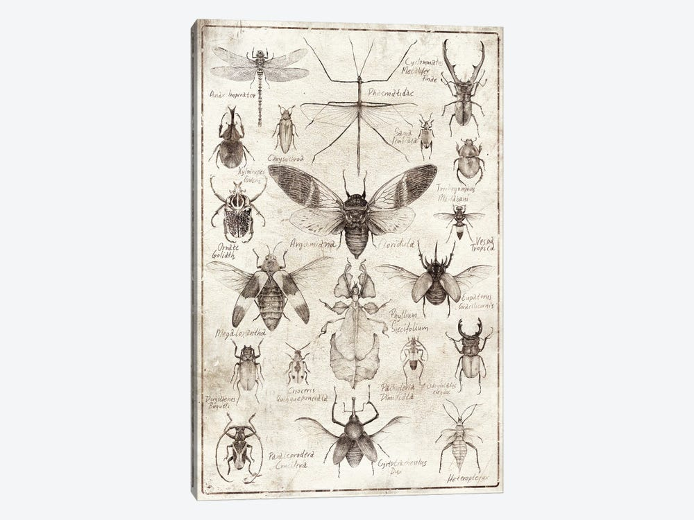 Insects B/W by Mike Koubou 1-piece Canvas Art