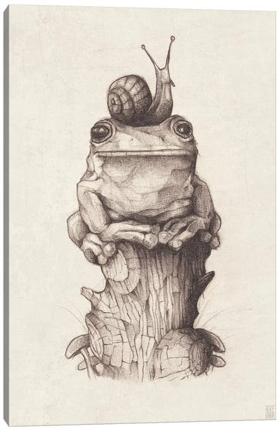 Frog And Snail I Canvas Art Print