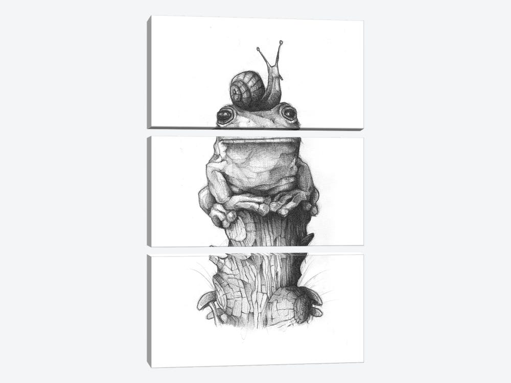 Frog And Snail II by Mike Koubou 3-piece Canvas Print