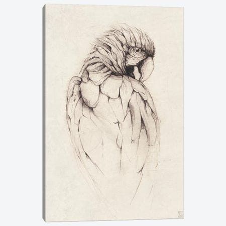 Parrot I Canvas Print #MKB48} by Mike Koubou Art Print