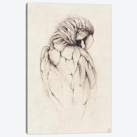 Parrot I Canvas Print #MKB48} by Mike Koubou Art Print