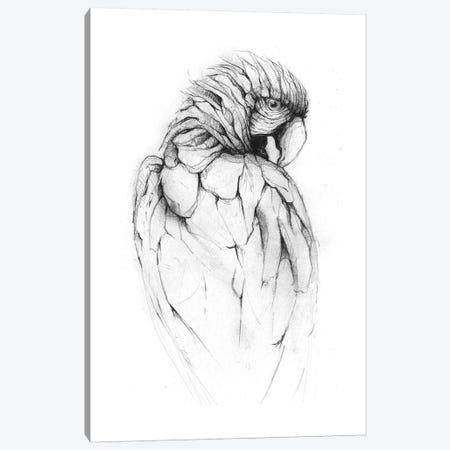 Parrot II Canvas Print #MKB49} by Mike Koubou Canvas Print