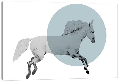 White Horse by Morgan Kendall Canvas Art Print