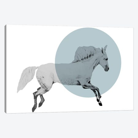 White Horse Canvas Print #MKE100} by Morgan Kendall Art Print