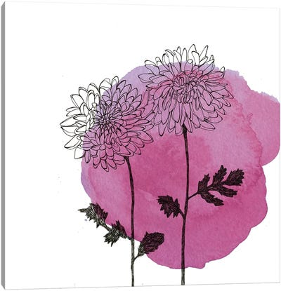 Chrysanthemums Canvas Print #MKE102