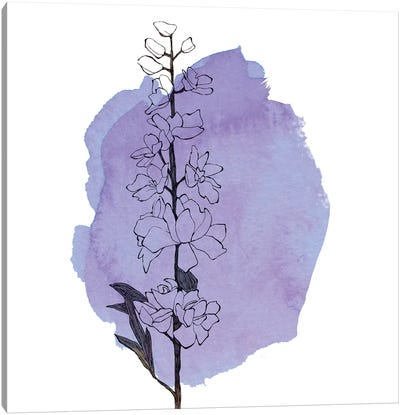 Delphinium Canvas Art Print