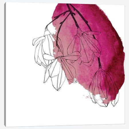Japanese Magnolia Blossoms Canvas Print #MKE108} by Morgan Kendall Art Print