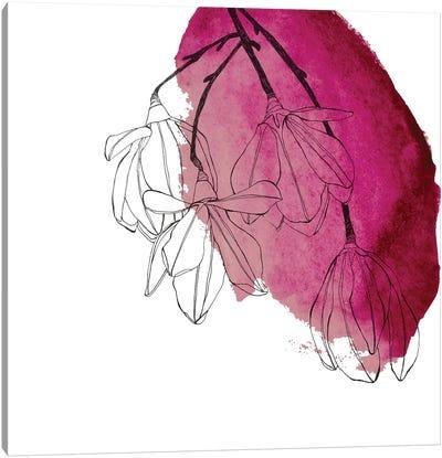 Japanese Magnolia Blossoms Canvas Art Print