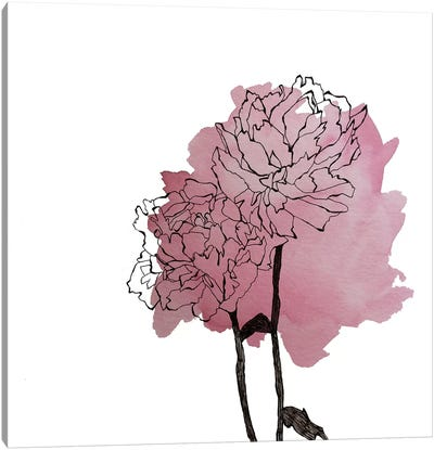 Peonies II by Morgan Kendall Canvas Art Print