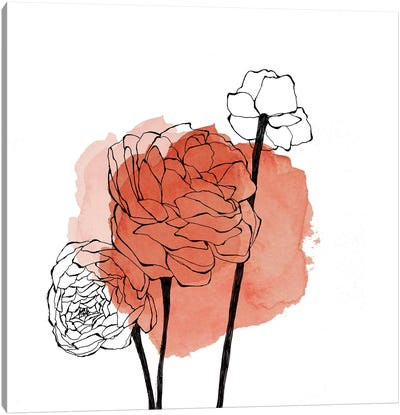 Ranunculus by Morgan Kendall Canvas Art Print