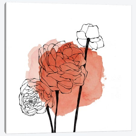 Ranunculus Canvas Print #MKE111} by Morgan Kendall Canvas Art