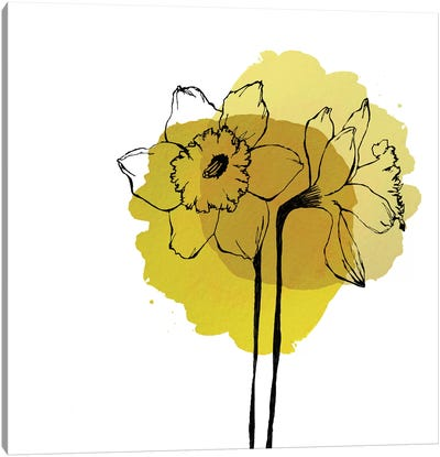 Yellow Daffodils by Morgan Kendall Canvas Art Print