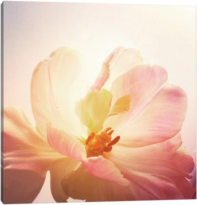 Parrot Tulip Canvas Art Print