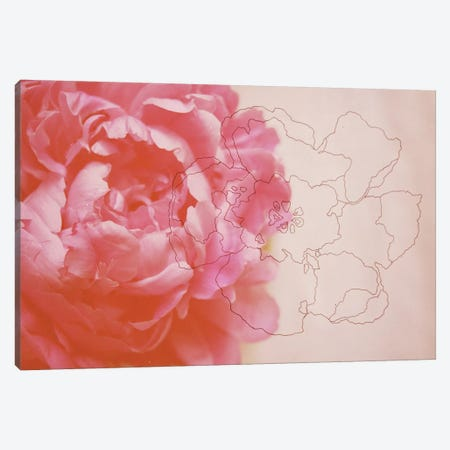 Peonies Canvas Print #MKE1} by Morgan Kendall Canvas Wall Art