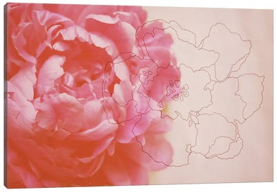 Peonies Canvas Print #MKE1