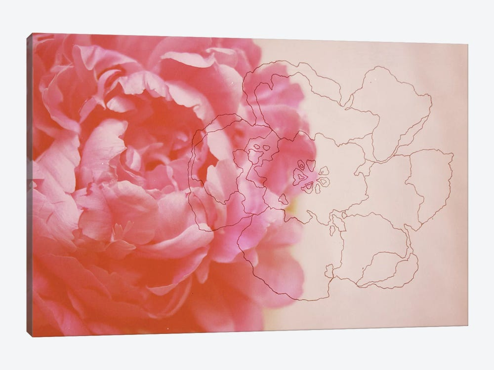 Peonies by Morgan Kendall 1-piece Canvas Print