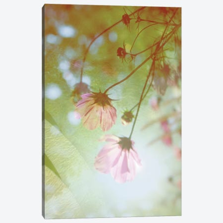 Dreamland Canvas Print #MKE21} by Morgan Kendall Canvas Art