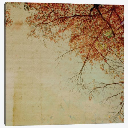 Through The Tree Tops Canvas Print #MKE57} by Morgan Kendall Canvas Wall Art