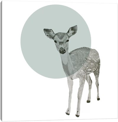 Deer by Morgan Kendall Canvas Art Print