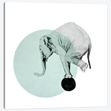 Elephant Canvas Print #MKE66} by Morgan Kendall Canvas Print