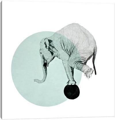 Elephant by Morgan Kendall Canvas Art Print