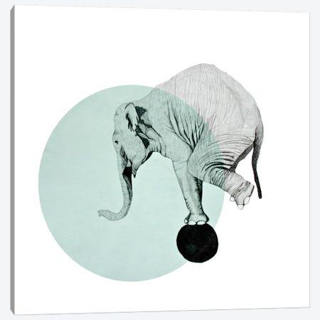 Elephant Canvas Print #MKE66} by Morgan Kendall Canvas Print