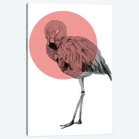 Flamingo Canvas Print #MKE67} by Morgan Kendall Art Print