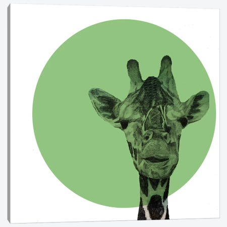 Giraffe Canvas Print #MKE69} by Morgan Kendall Canvas Artwork
