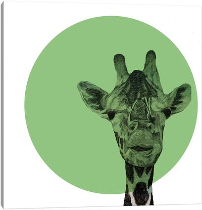 Giraffe by Morgan Kendall Canvas Art Print
