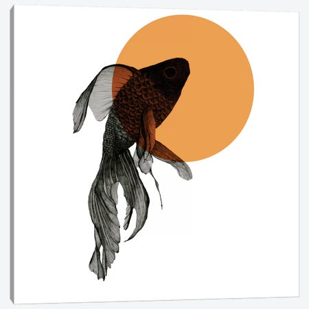Goldfish Canvas Print #MKE70} by Morgan Kendall Canvas Print