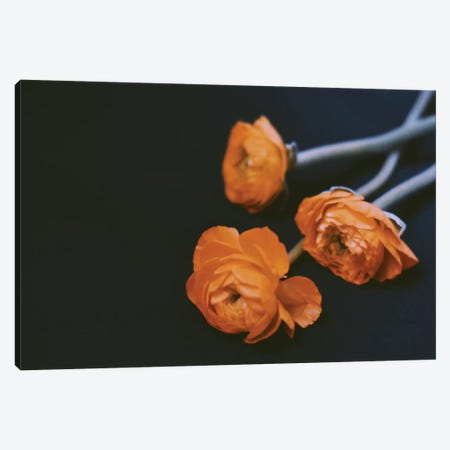 Yellow Ranunculus 3-Piece Canvas #MKE72} by Morgan Kendall Canvas Print