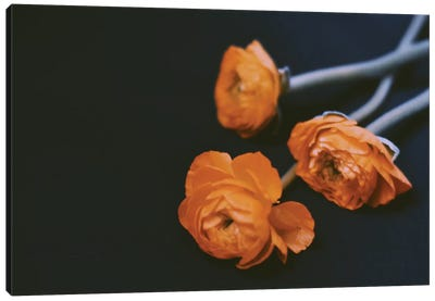 Yellow Ranunculus Canvas Art Print