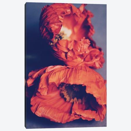 Orange Poppies Canvas Print #MKE80} by Morgan Kendall Canvas Artwork